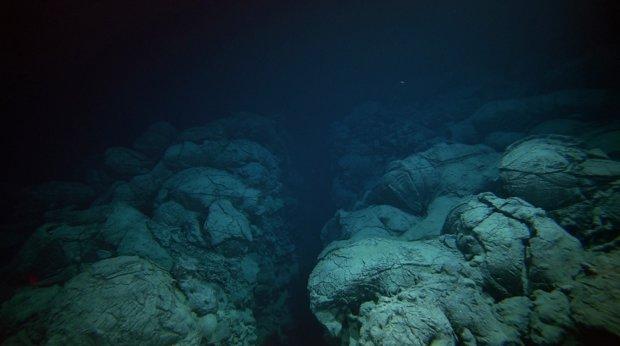 Жуткие твари: на дне океана нашли портал в иной мир