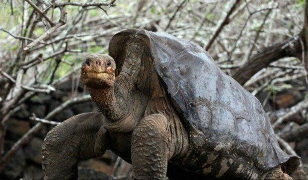 Столетний самец черепахи спас род от вымирания