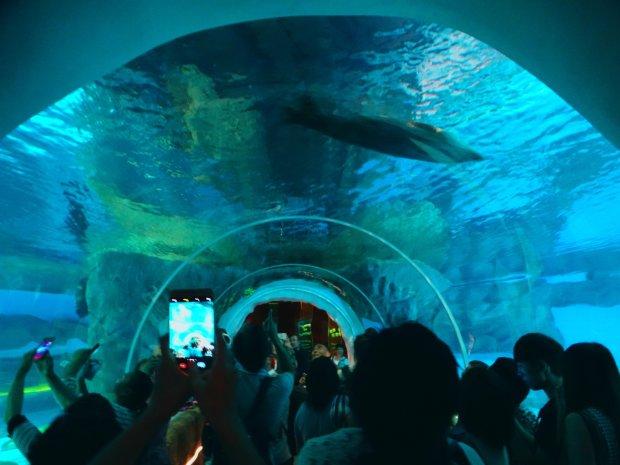 Голяка до акул: екстремальні купання неадекватного туриста зняли на відео