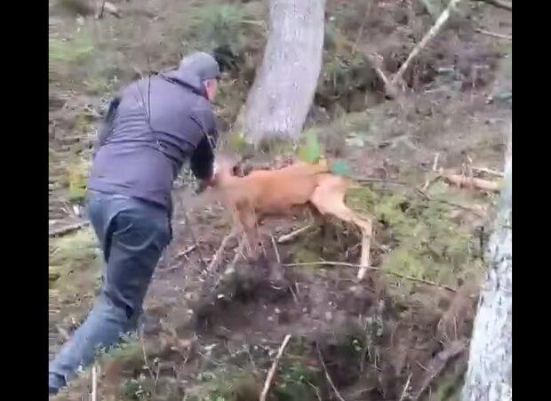 В Карпатах резвый олененок напал на грибника - защищал дом, как бойцовский пес