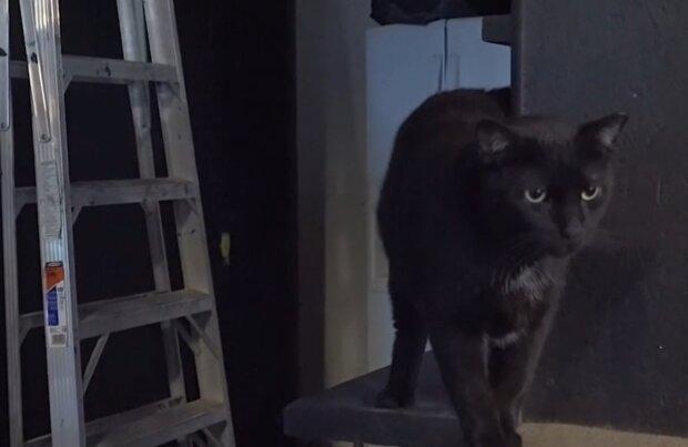 Коты на работе, кадр из видео