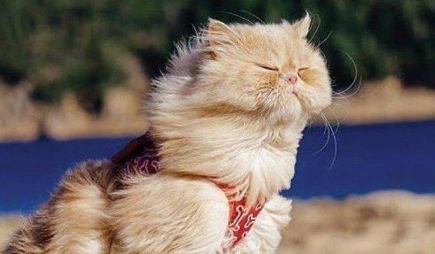 Коты-экстремалы (фото)