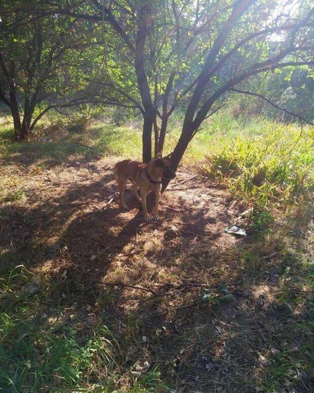 Посадили на цепь и бросили умирать: извергов из Запорожья поймали на горячем