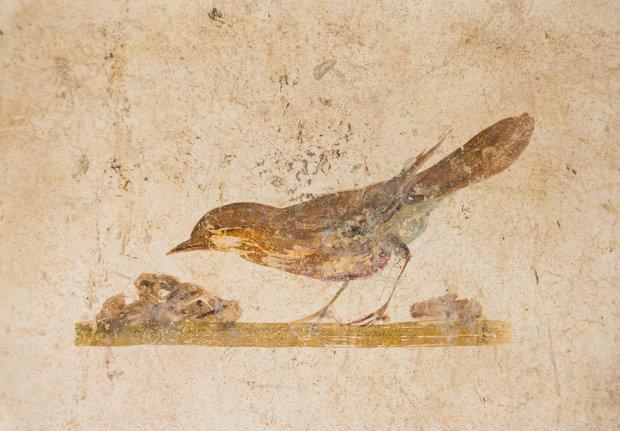 Беременная окаменелость: палеонтологи обнаружили древнейшую птицу с сюрпризом