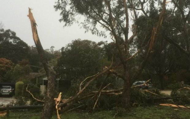 Негода залишила українців без світла, валила дерева і рвала дроти