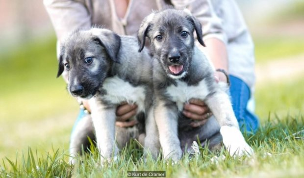 Ветеринари в шоці: на світ з'явилися перші собаки-близнюки (фото)