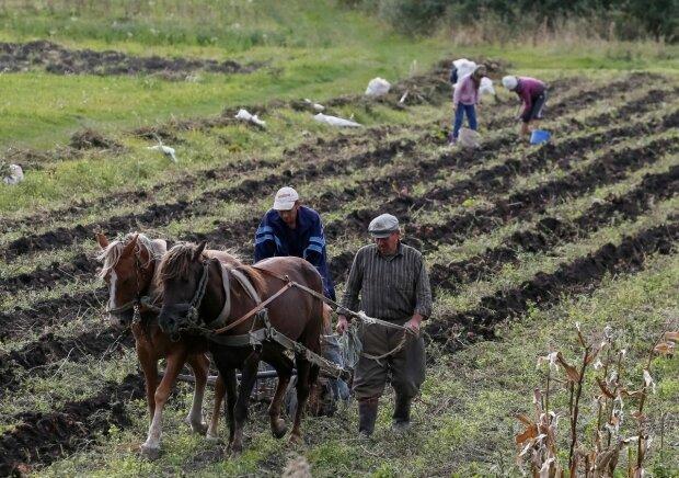 Украинские фермеры получат 400 млн от Европейского банка: на что пойдут эти деньги