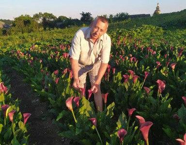 """Тернополянин засадил огород каллами вместо картошки и стал звездой сети: """"Цветы - как женщины"""""""