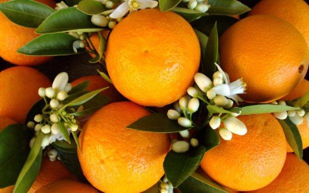 В Україну завезли 25 тонн апельсин з личинками мерзенних тварюк