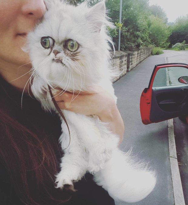 Даже самый страшный кот в мире умиляет человечество. Пушистик собрал больше 100 тысяч поклонников, сети не могут налюбоваться