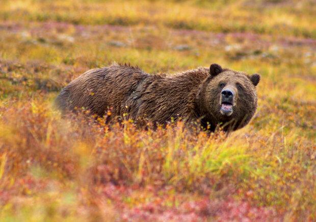 медведь, pxhere