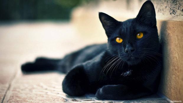 Коти в політиці: мер втомився від агітації і доручив це чотирилапому другу