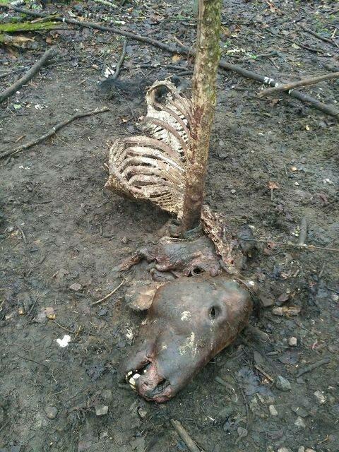 Фото: Чернобыльский заповедник