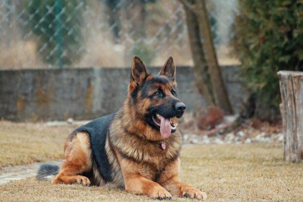 Що робити, якщо вкусив собака: перша допомога і як запобігти