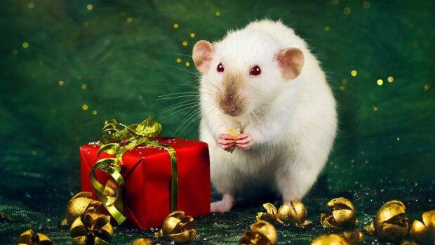 2020 - год Белой Металлической Крысы: чего ожидать каждому в сфере здоровья, любви и финансов