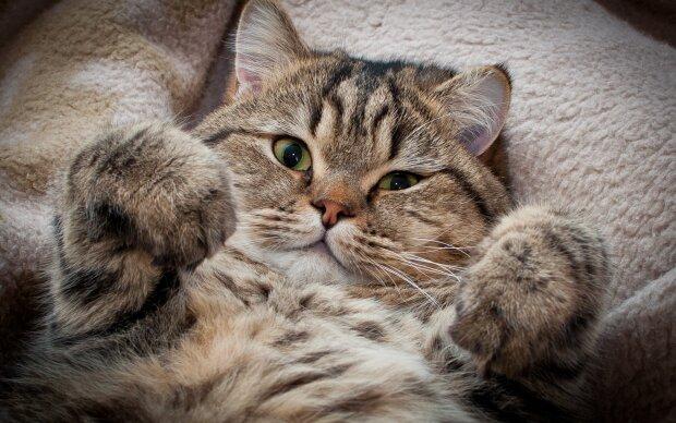 Ученые смогли разузнать, любит ли вас ваша кошка: после этого собаки навсегда уйдут в небытие