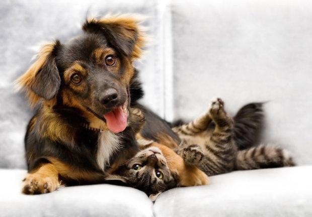 Кумедна добірка тварин, чия поведінка залишає бажати кращого: коли друзі людини перетворюються на нахабних шкідників