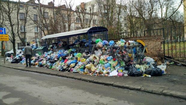 Крысы и полная антисанитария: жители Львова массово жалуются на мусор, кадры тотального свинства