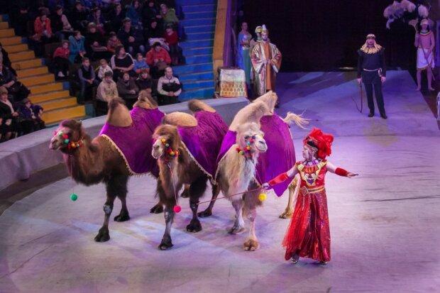 Цирку в Запоріжжі не буде? Містянам пропонують незвичайну альтернативу