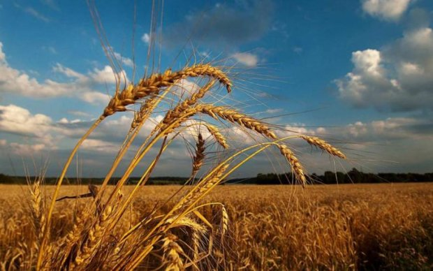 Михей Тиховей 27 августа: история и традиции христиан