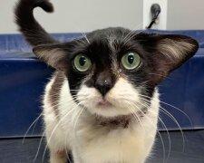 Кошка, похожая на Йоду, Facebook