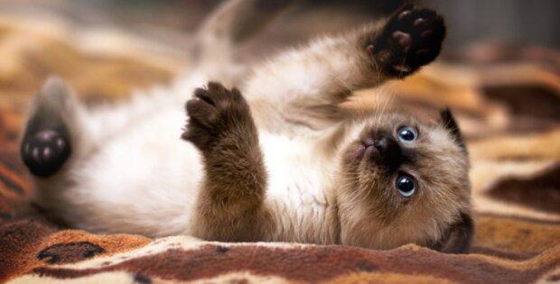 Грайливий котик, фото з відкритих джерел