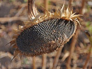Тонни насіння ледь не стали могилою для українки, врятували в останній момент