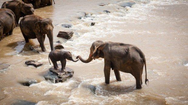 """В Африці народилося слоненя з унікальним кольором шкіри: """"Одне з найцікавіших явищ, що я бачив в природі"""""""