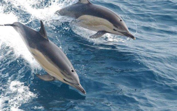 Дельфины в очередной раз доказали свое превосходство