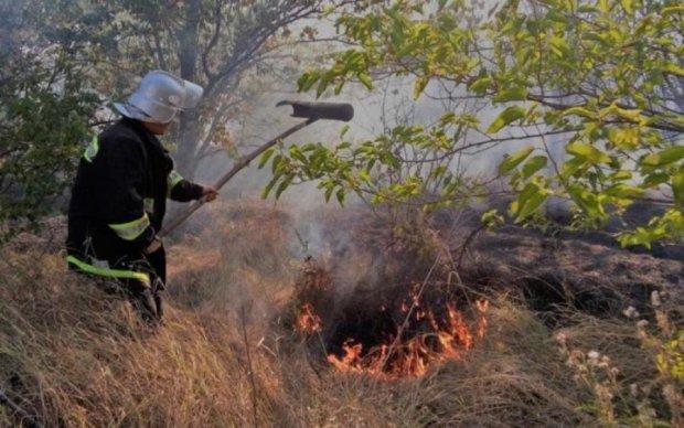 Масштабні лісові пожежі скували Херсонщину: відео