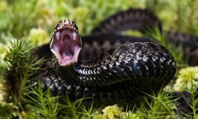 Змея укусила: советы по неотложной помощи