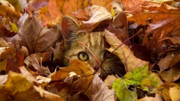 Котик, Pinterest
