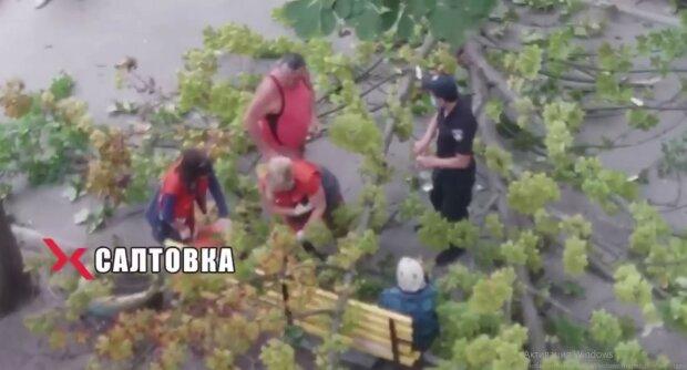На Салтовке упавшее дерево чуть не убило бабушку, скриншот
