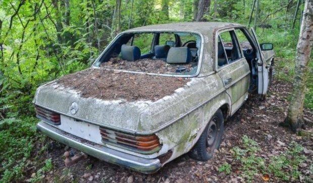 Блогер обнаружил заброшенные Mersedes в лесу (ФОТО)