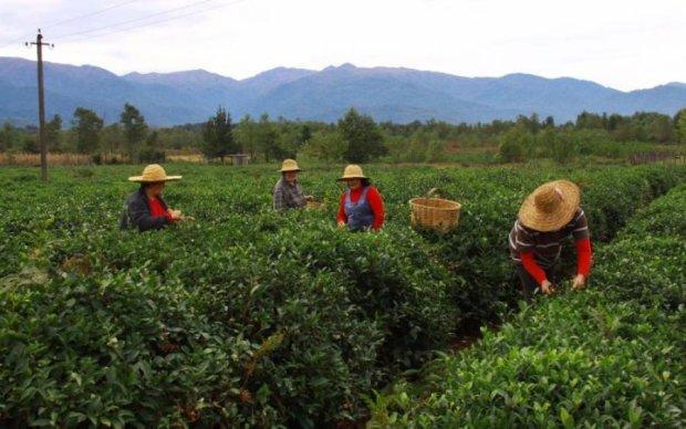 Реформа сільського господарства: українці за кордоном вчать секретам гарного врожаю