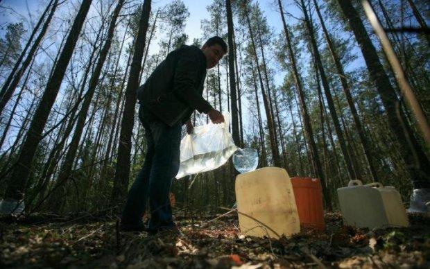 Березовий сік для дорослих: експерти навчилися видобувати алкоголь з дерев