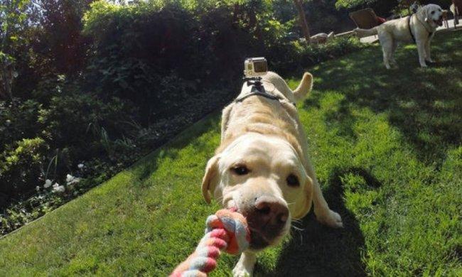 Nikon навчить собак фотографуватися