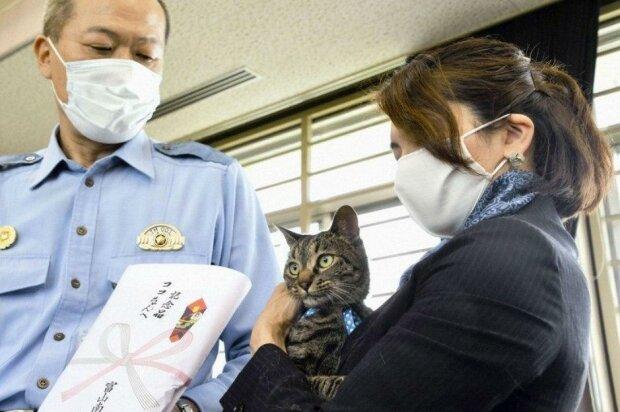 Кішка-героїня, фото Lenta lite