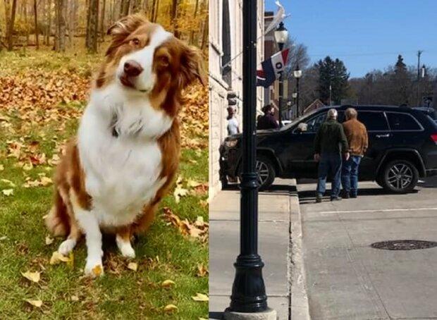 """Собака угнала машину у хозяина и устроила ДТП: """"Думали, что это шутка"""""""
