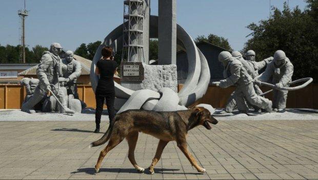 Четырехлапые дети Чернобыля: как волонтеры помогают животным в зоне отчуждения
