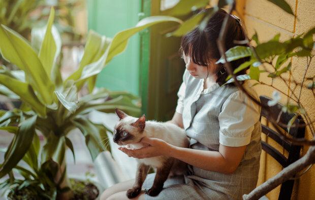 кішка на руках дівчини, фото Pxhere