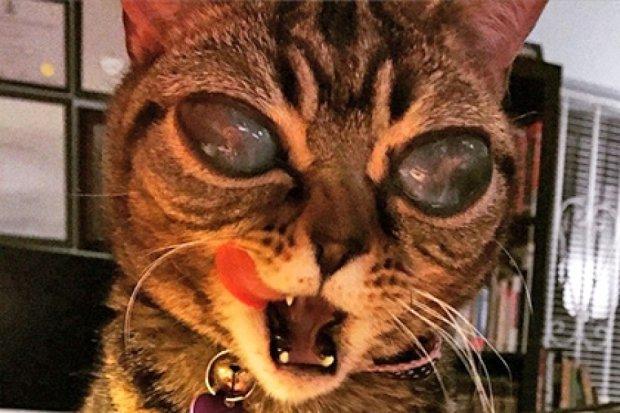 Кошка-инопланетянка стала звездой Instagram