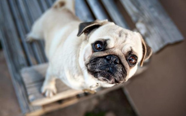 Жахлива смерть собаки поставила на вуха соцмережі