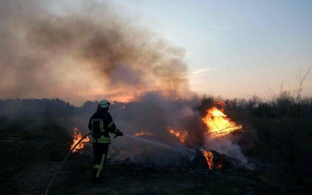 Пожар сухостоя, фото ГСЧС