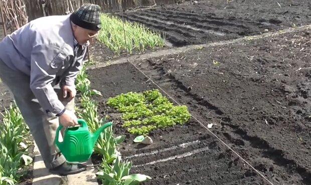 Вирощування зелені та овочів, скріншот: YouTube