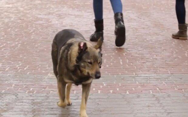 Собака, кадр з репортажу ТРК ВЕЖА: YouTube