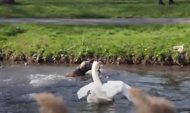 """Під Хмельницьким """"сині"""" мисливці влаштували криваву баню лебедям - """"Як рука не відсохла?!"""""""