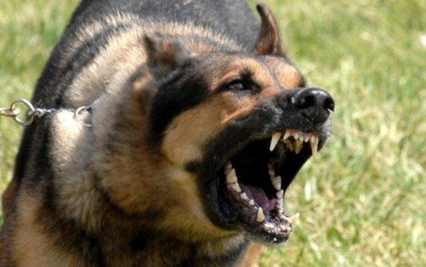 Скажені тварини атакують: Супрун розповіла, як уберегти себе і дітей