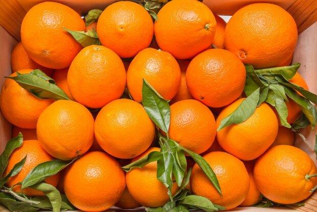 Закатали в асфальт: во Львове перед Новым годом уничтожили гору апельсинов, - виновата маленькая…