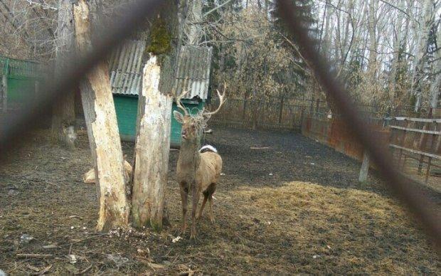 Російський зоопарк перетворився на в'язницю для тварин